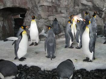 Penguins at Kelly Tarlton's Underwater World - Auckland