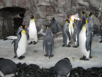 Penguins at Kelly Tarlton's Underwater World - Auckland