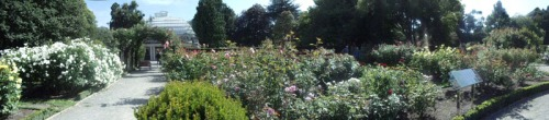 The Rose Garden - Christchurch Botanical Gardens