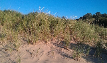Holland State Park - Sand Dunes