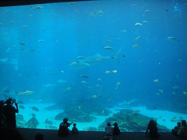Georgia Aquarium - Tropical Diver