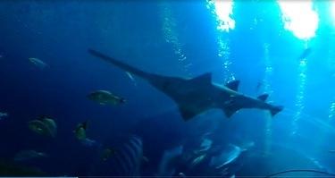 Georgia Aquarium Ocean Voyager Tunnel
