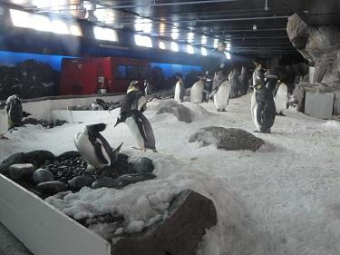 Penguins in Auckland, New Zealand aquarium, Antarctic snowcat