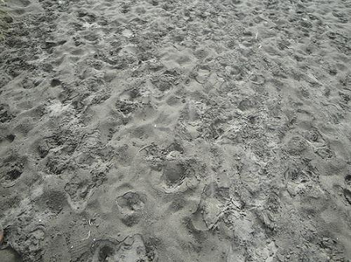 Te Henga, Bethells Beach, volcanic sand - New Zealand