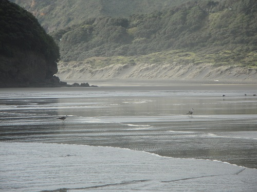 Te Henga, Bethells Beach - New Zealand