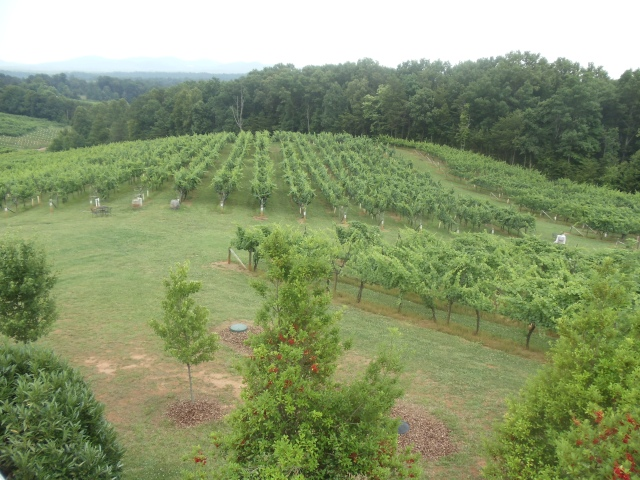 North Georgia wine country, Frogtown Cellars
