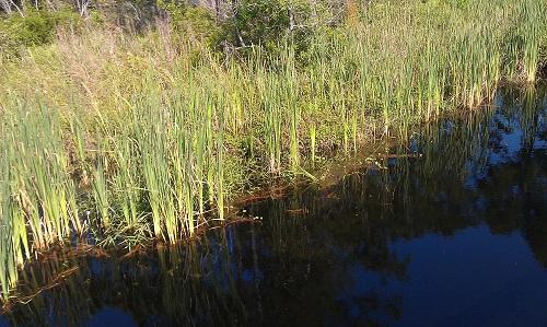 Big Lagoon State Park, Pensacola, Florida