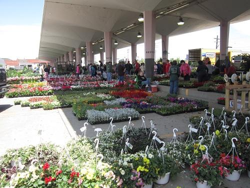 Spring in Detroit - Flowers at Eastern Market