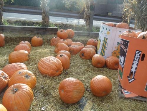 Michigan Autumn, pumpkins