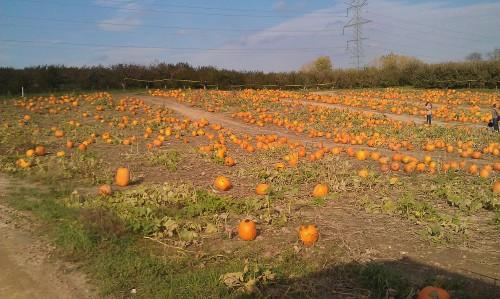 Michigan Autumn, pumpkin patch