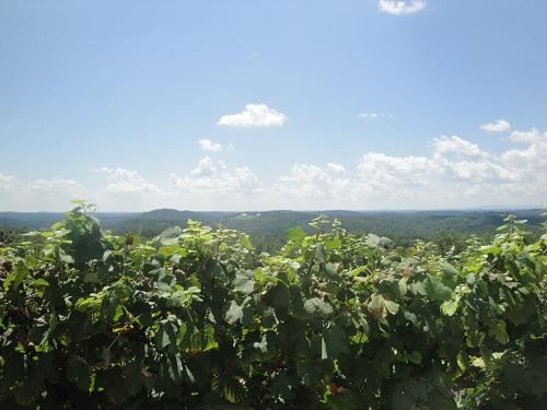 Wolf Mountain Vineyards, Georgia wine country