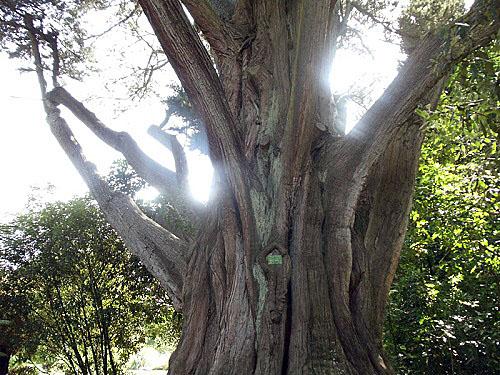 Christchurch Botanic Gardens, New Zealand