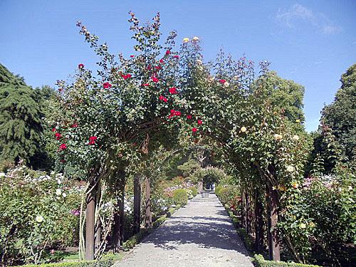 Christchurch Botanic Gardens, New Zealand, Rose Garden