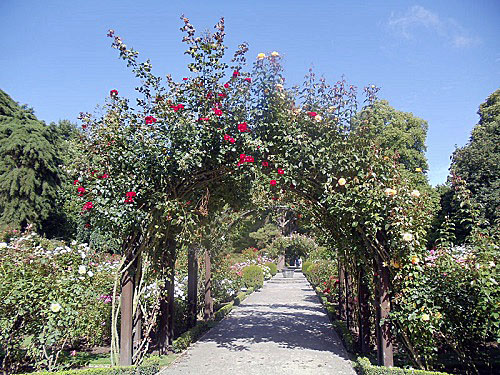 Christchurch Botanic Gardens, New Zealand, Rose Garden