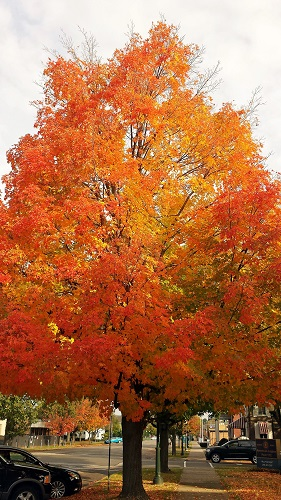 Michigan, fall leaves, Autumn