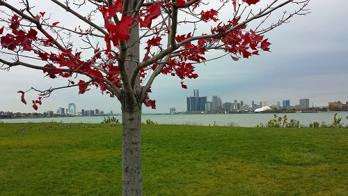 Michigan, fall leaves, Autumn, Detroit, Windsor skyline