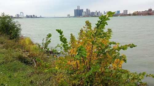 Michigan, fall leaves, Autumn, Detroit, Windsor skyline