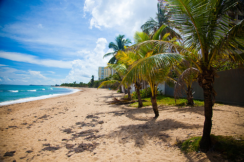 Caribbean Beach, palm trees