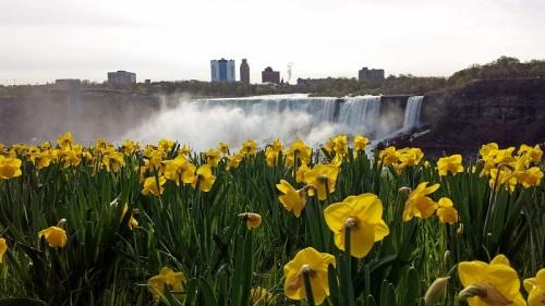 Niagara Falls, Canada flowers