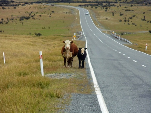 State Highway 80, South Island, New Zealand road trip