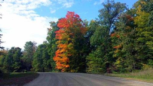 Micihigan, Autumn, Huron Meadows Metro Park