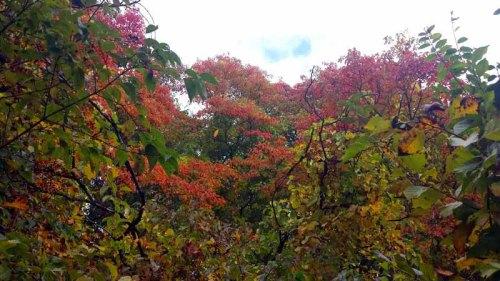 Wildwood Preserve Metro Park, Toledo, Ohio, Autumn, fall colors