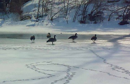 Findlay, Ohio, winter, Blanchard River, Riverside Park