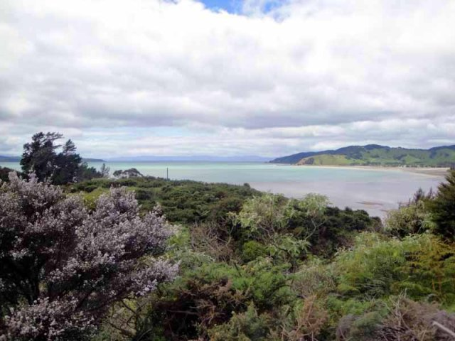 Firth of Thames, North Island, New Zealand