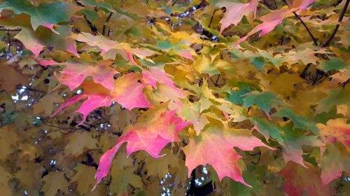 Autumn - PureMichigan - 2015