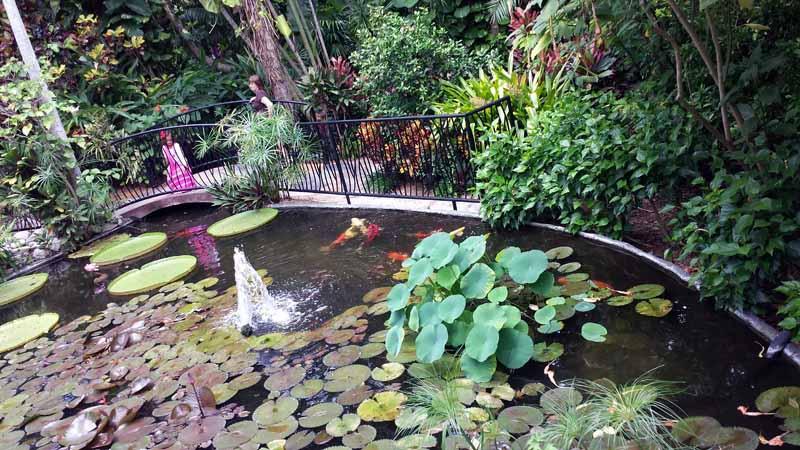 Sunken Gardens A St Pete Tropical Paradise The Adventures Of Elatlboy
