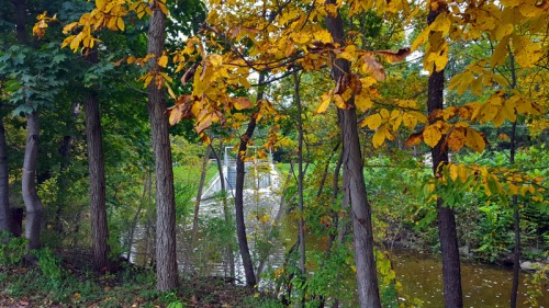 Hell, Michigan - The 2016 Edition of Autumn in Pure Michigan