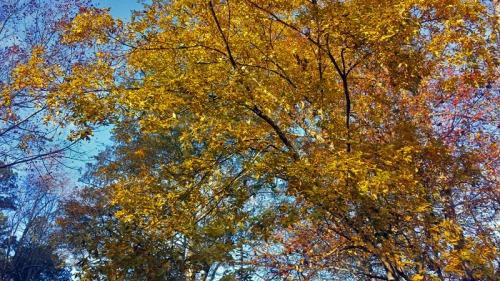 Suwanee Creek Greenway outside Atlanta