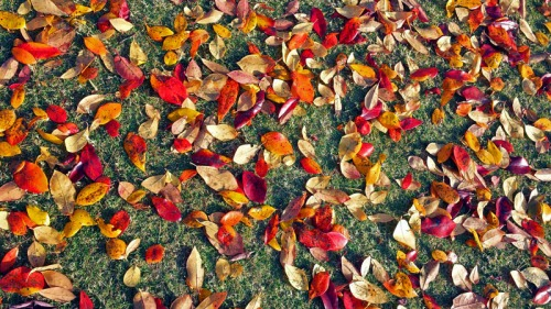 Autumn leaves of the Deep South and Georgia