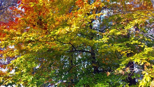Fall colors in Gwinnett County outside Atlanta.