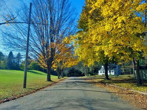 n 2017 - Ann Arbor residential fall scene