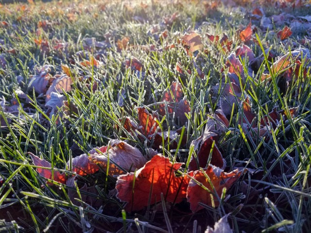 n 2017 - Early morning frost