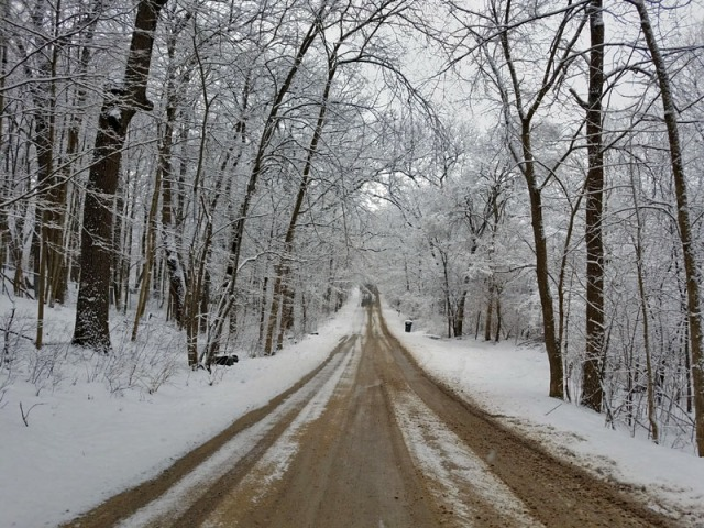 Bird Rd. - Ann Arbor winter scene