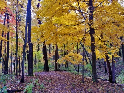 Ann Arbor Fall colors, Nichols Arboretum, Michigan