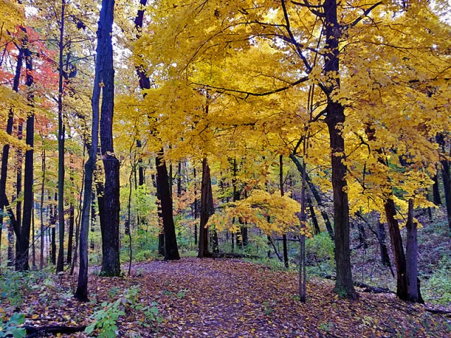 Ann Arbor Fall colors, Nichols Arboretum, Michigan