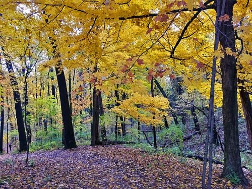 Ann Arbor Autumn colors, Nichols Arboretum, Michigan