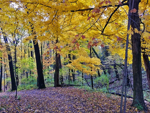 Ann Arbor Autumn colors, Nichols Arboretum, Michigan