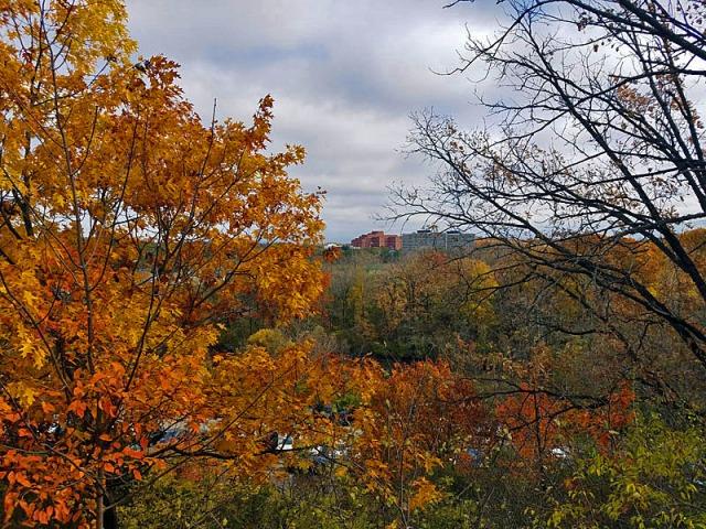 Ann Arbor Fall leaves, Nichols Arboretum, Michigan