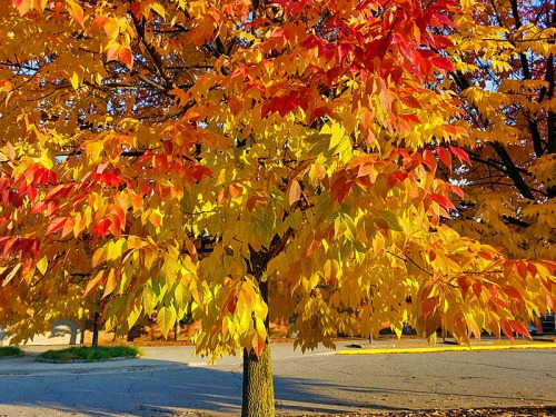 The bright reds, oranges and yellows of the season