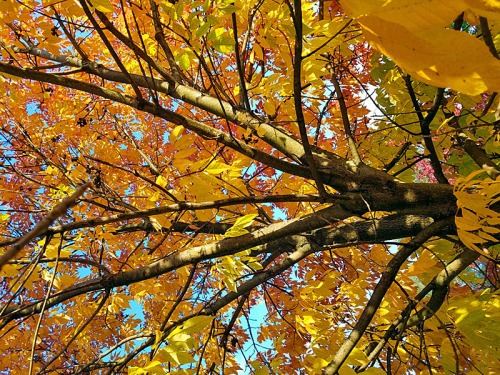 Love going into trees and looking straight up