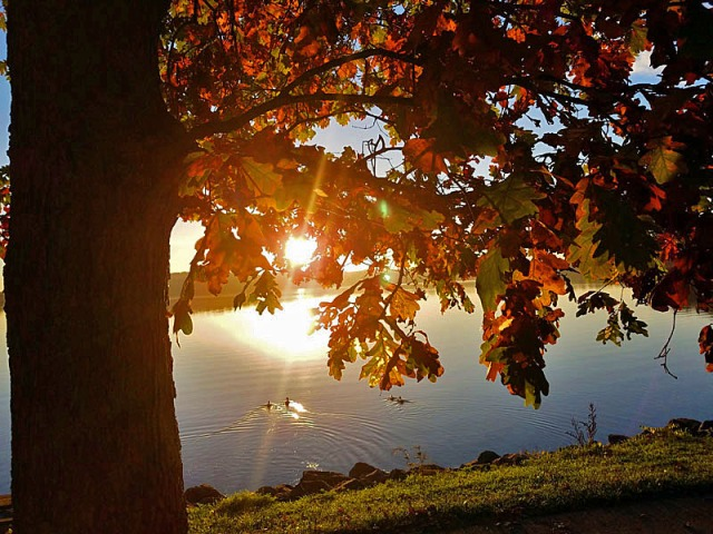 Autumn sunrise, Kensington Park, Milford, Michigan