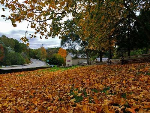Parker Mill County Park, Ann Arbor Fall colors