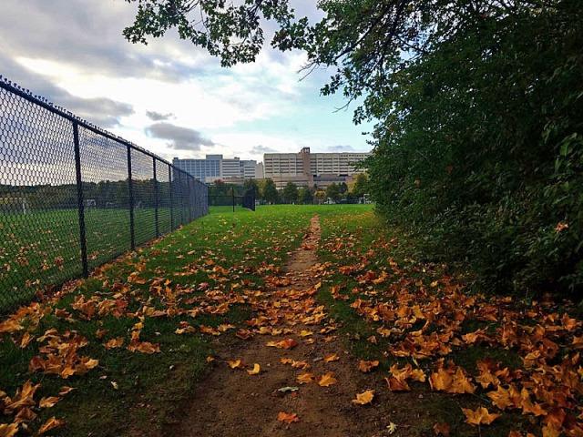 Fuller Park, Ann Arbor