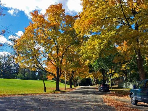 Fall colors in Ann Arbor