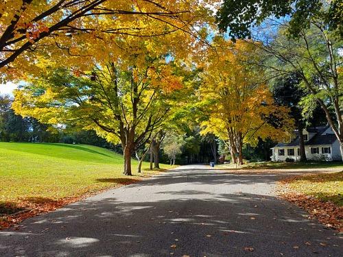 Ann Arbor Autumn colors
