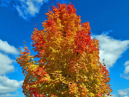 Looking up, up, up for the bright colors of the season